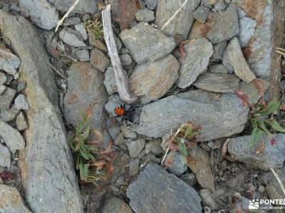 Macizo Buitrera-Sierra de Ayllón; single madrid actividades sigüenza fotos senderismo por la sierra